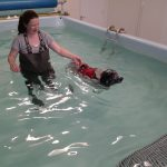 treatment in the hydrotherapy pool